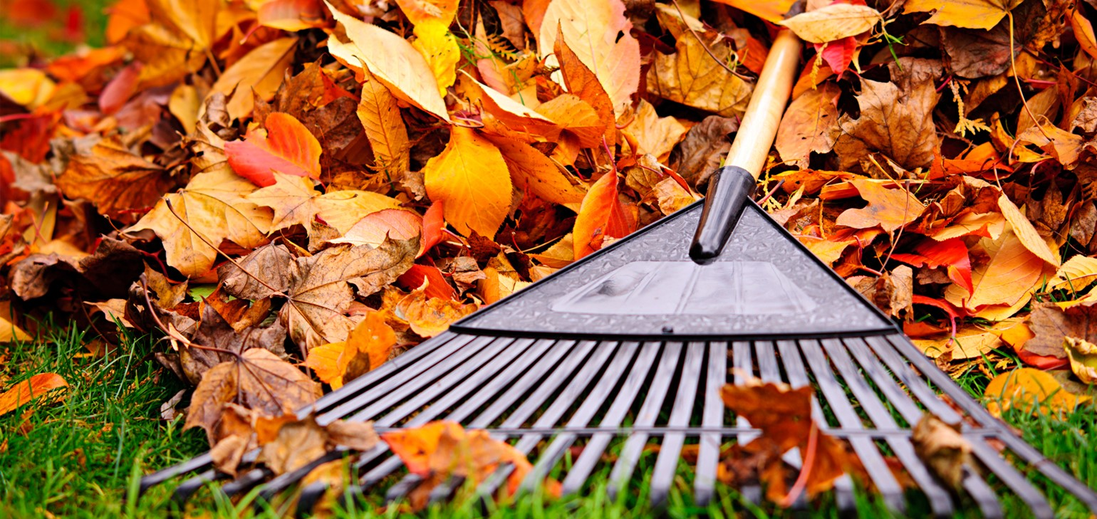 2020 Fall Leaf Collection Schedule