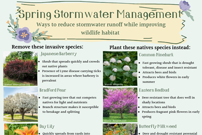 Spring Stormwater Tips